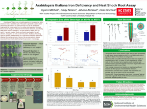 Research poster on Arabidopsis Iron Deficiency and Heat Shock